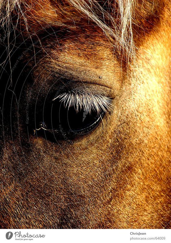 Titellos alt Einsamkeit Auge Tier Haare & Frisuren Traurigkeit hell braun Feld Zeit Fliege trist Pferd Trauer Spuren Amerika