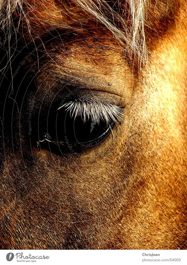 Titellos Haare & Frisuren Auge Tier Feld Pferd Fliege alt Traurigkeit weinen hell trist braun Trauer Einsamkeit Zeit Lied Belichtung Pferdekopf Wimpern Tränen