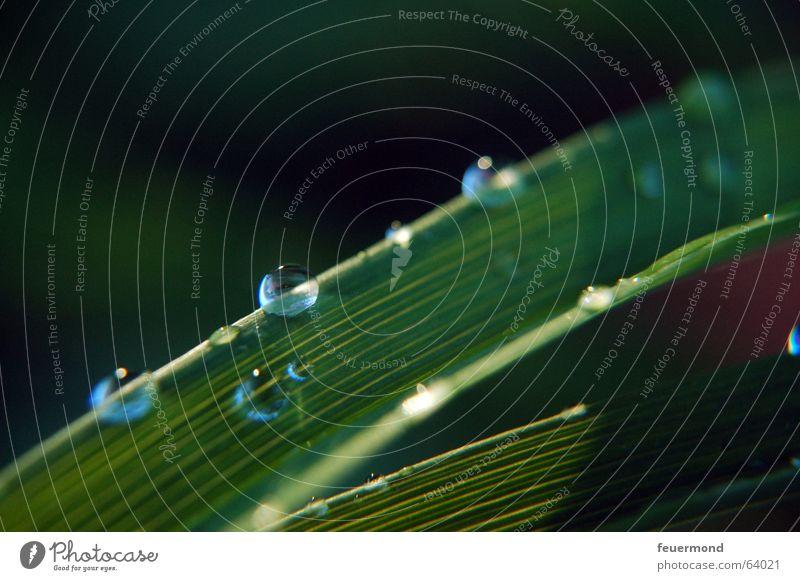 Tröpfchen, Tröpfchen... Wassertropfen Blatt grün Pflanze Erfrischung Regen Licht Gras Wiese water rain raindrops