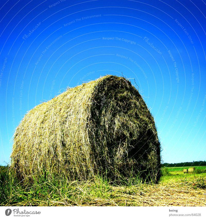 Rapsroulade Rolle Blütenkette Biologische Landwirtschaft biologisch Omega-3-Fettsäure Feld Stroh Heu Strohballen Heuballen Strohrolle Ernte Herbst