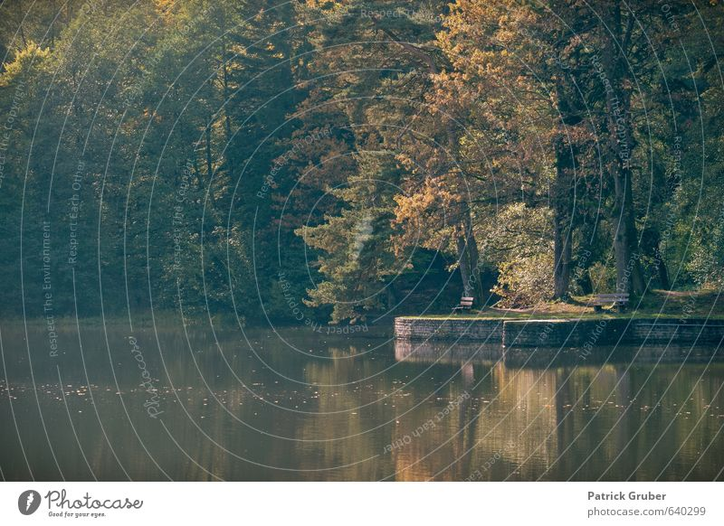 Herbststimmung am Ebnisee Natur Wasser Baum Landschaft Seeufer Dorf herbstlich