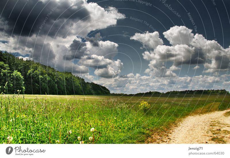 Lieblingswetter. Natur Himmel Baum grün Sommer Wolken Wald Wiese Gras Wege & Pfade Beleuchtung Weide
