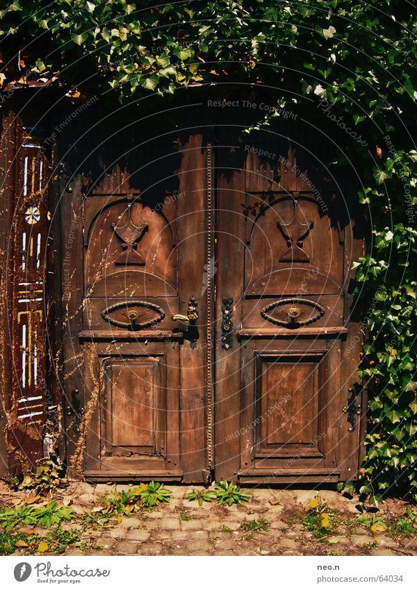 Geheime Tür Haus Pflanze Efeu Burg oder Schloss Ruine Architektur Holz Schlüssel alt dunkel historisch braun grün geheimnisvoll Schnitzereien mystisch Portal