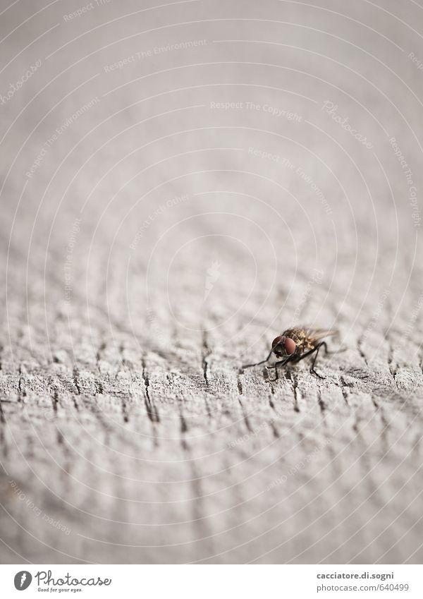 Minimalist Fliege 1 Tier einfach Freundlichkeit klein natürlich niedlich weich braun grau Lebensfreude Optimismus Mut bescheiden sparsam Interesse Langeweile