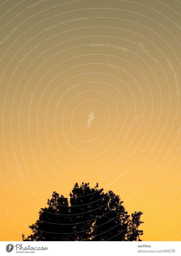 die photocase-Sonne geht wieder auf Baum Abenddämmerung