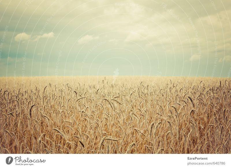 im Felde Umwelt Natur Landschaft Pflanze Erde Luft Himmel Wolken Horizont Sonne Sonnenlicht Sommer Herbst Klima Schönes Wetter Nutzpflanze leuchten stehen