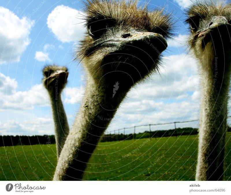 Die drei Musketiere Himmel Wolken Auge Tier Vogel Neugier beobachten Blumenstrauß Kontrolle Interesse ernst Laune Überwachungsstaat Politik & Staat Launisch