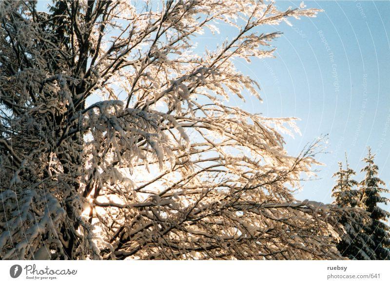 Winterbaum Baum Schnee
