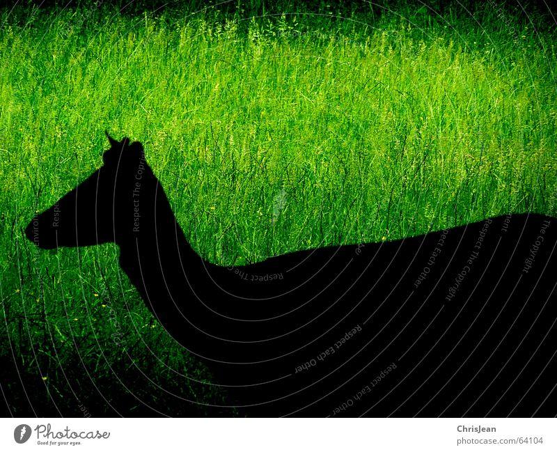 Schattengestalt Wiese grün schwarz Tier Hirsche bearbeitet Leben Gras Fressen schieben dunkel Hintergrundbild Vordergrund stechend Park Wildtier Gelassenheit