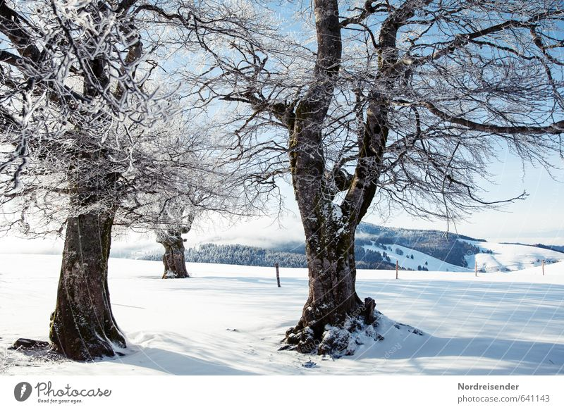 Winter nur Oben.... Natur Ferien & Urlaub & Reisen blau weiß Pflanze Baum Erholung Landschaft ruhig Schnee Eis glänzend Idylle Tourismus wandern