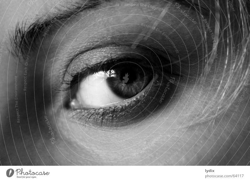ichsehalles Wimpern Augenbraue blond Blick Schminken Kajal Wimperntusche Lidschatten Schwarzweißfoto beobachten Kontakt Haut Haare & Frisuren popille Nase Falte