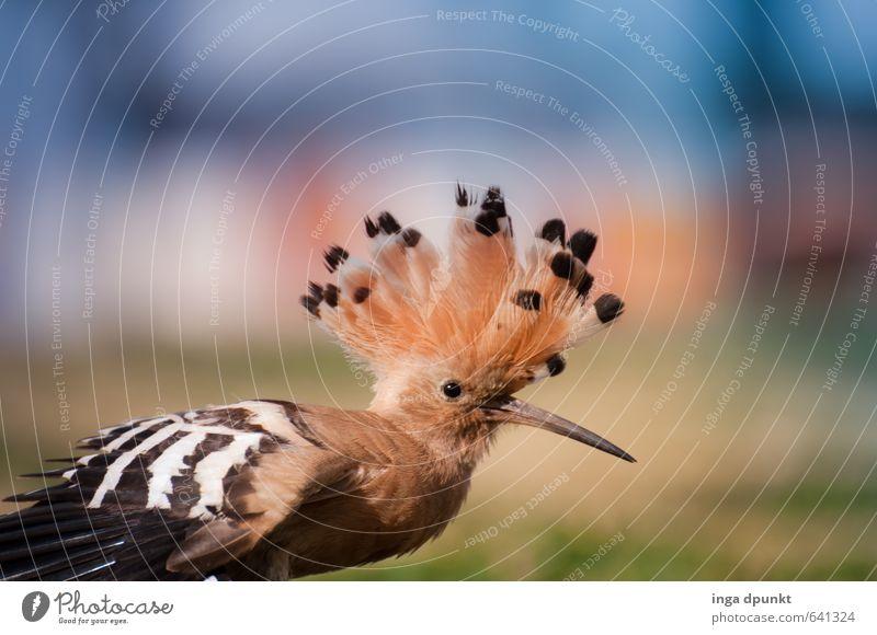Indianerhäuptling Natur schön Tier Umwelt Haare & Frisuren Vogel Wildtier Feder Coolness Flügel Körperhaltung Tiergesicht trendy Umweltschutz Punk