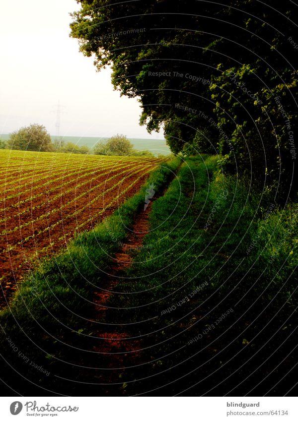 Am Waldesrain da warte ich auf dich ... Natur grün Sommer Blatt Gras Frühling Feld laufen Spaziergang Fußweg