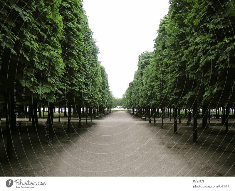 Allee olé Paris Frankreich Park Baum Blatt france Wege & Pfade Baumstamm