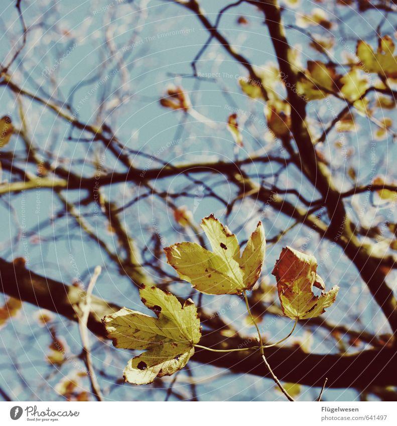 Herbstlich Umwelt Natur Landschaft Pflanze Tier Urelemente Frühling Klima Klimawandel Wetter Schönes Wetter schlechtes Wetter Nebel Baum Mut Herbstlaub