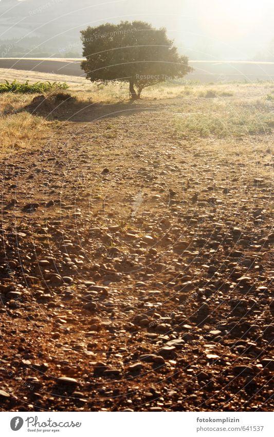 Baum Landschaft Feld Acker Geröllfeld Steinfeld Erholung wandern Wärme Gelassenheit geduldig ruhig Einsamkeit Zufriedenheit einzigartig Frieden Pause Ferne