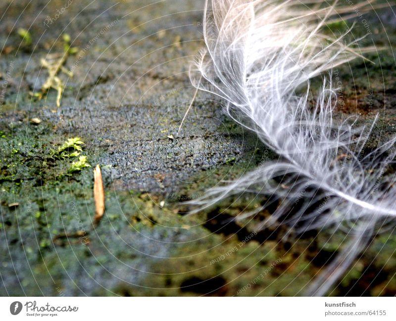 federleicht... alt weiß grün Baum dunkel Spielen Bewegung Holz Freiheit hell Wind fliegen frei nass Feder Baumstamm