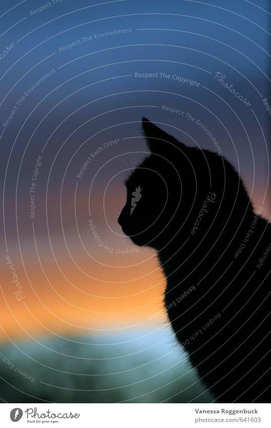 Warten auf die Nacht Katze Kind Natur Jugendliche blau alt schön Erholung rot Landschaft Tier dunkel Traurigkeit Liebe Kunst träumen