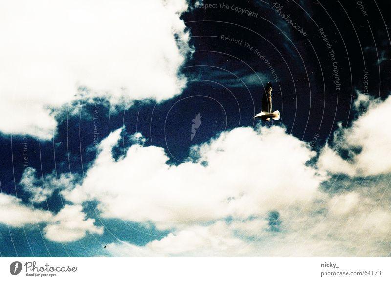 fly above the sky Himmel weiß blau Wolken Vogel Schönes Wetter Möwe Elbe