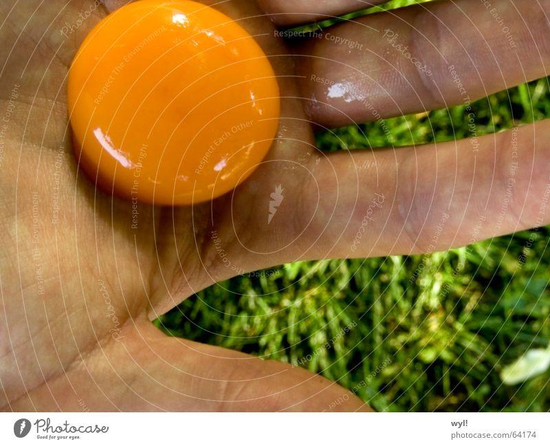 Ei Ei Ei Eigelb Hand Finger Daumen Rührei Gras Wiese grün Sommer Eiklar Ernährung Haut grashalb orange Falte handinnenfläche