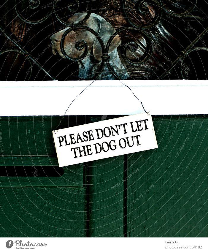 """an einer grünen Tür hängendes weisses Türschild mit schwarzer Aufschrift """"PLEASE DON'T LET THE DOG OUT"""" in Großbuchstaben Hund Jagdhund Jäger einsperren Holztür"""