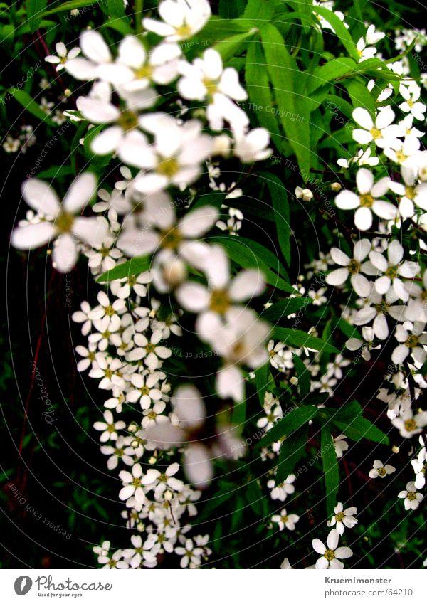 Sommer schön weiß Blume Blatt Blüte Frühling