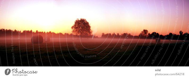 tequila sunrise Natur Freude ruhig Einsamkeit Farbe Wiese rosa Nebel Müdigkeit genießen Heuballen Oberschleißheim