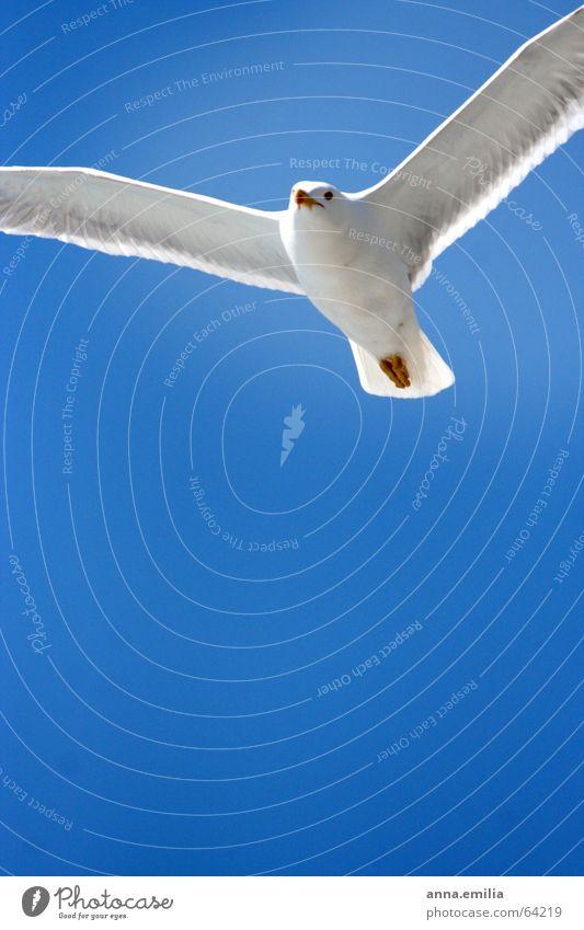 italienische Möwe Strand Vogel Luftverkehr