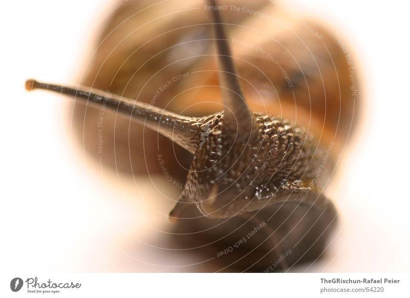 Snail Haus Tier gelb braun Frieden Reinigen sanft Schnecke Glätte Fühler langsam Schleim Hülse