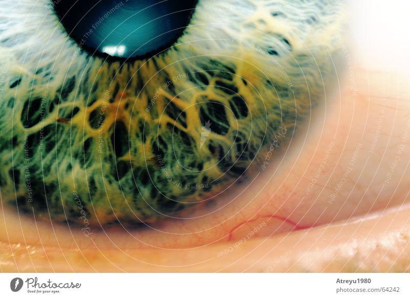 ..augenblick Pupille grün glänzend Makroaufnahme Reflexion & Spiegelung Gefäße blind Gesundheitswesen Auge Regenbogenhaut Detailaufnahme eye Blick atreyu