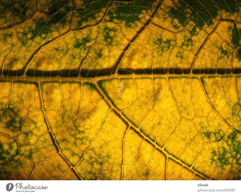 Labyrinth der Zucchini 4 Blatt Gefäße Blattunterseite Botanik Pflanze grün gelb braun Blattadern Licht Beleuchtung welk Blattgrün Wachstum Versorgung Physik