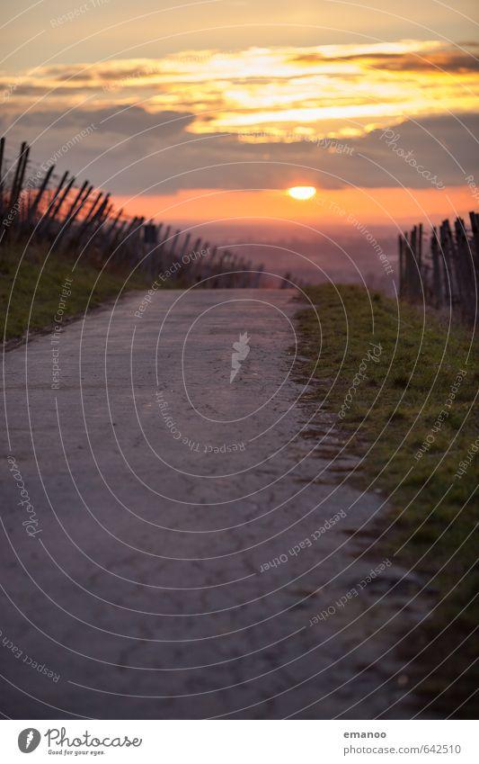 Der Weg in die Sonne Ferien & Urlaub & Reisen Ausflug Berge u. Gebirge wandern Natur Landschaft Himmel Wetter Schönes Wetter Nutzpflanze Hügel Verkehr Straße