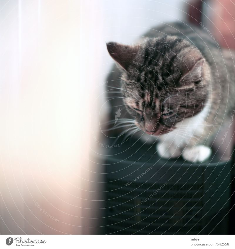 kurz wegnicken Katze Erholung ruhig Tier Gefühle klein Häusliches Leben Zufriedenheit Lifestyle genießen Warmherzigkeit niedlich schlafen weich Pause Müdigkeit
