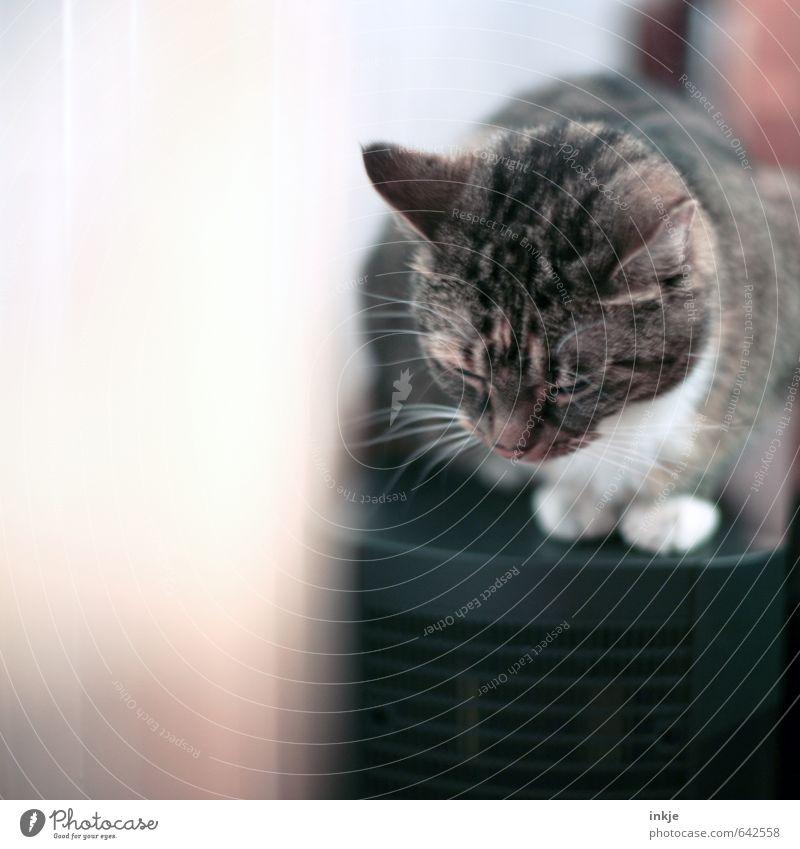 kurz wegnicken Lifestyle Häusliches Leben Tier Haustier Katze 1 Erholung genießen hocken schlafen kuschlig klein niedlich weich Gefühle Geborgenheit