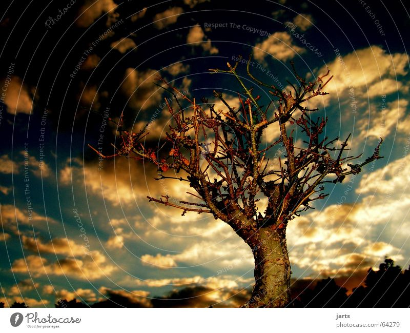 Guten Abend.... Baum Wolken Sonnenuntergang Licht Erholung Bonsai Horizont Märchen schön mystic Himmel jarts Fantasygeschichte