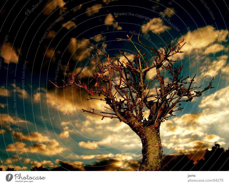 Guten Abend.... schön Himmel Baum Wolken Erholung Horizont Märchen Fantasygeschichte Sonnenuntergang Bonsai