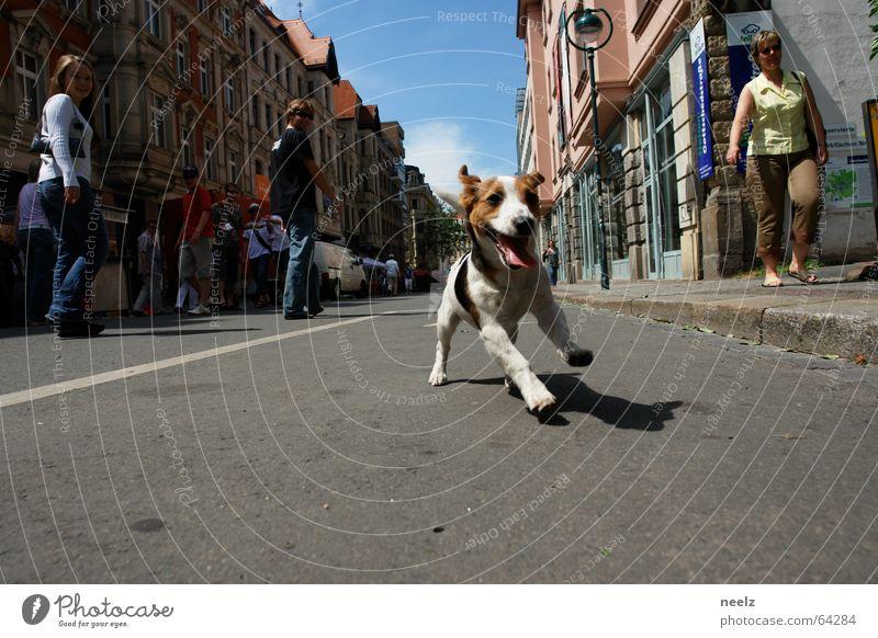 Leipziger Hund Freude Tier Straße Spielen Wildtier Geschwindigkeit Spaziergang rennen Jagd Leidenschaft Dynamik Lust Haustier Säugetier