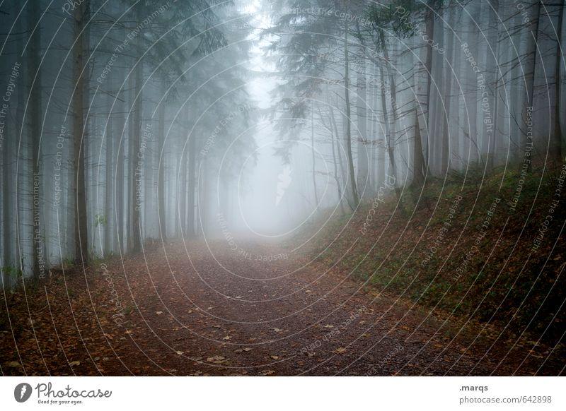 Wetter | Trüb Ausflug Abenteuer Umwelt Natur Landschaft Herbst Klima Unwetter Nebel Baum Nadelbaum Wald Wege & Pfade bedrohlich dunkel kalt trist Angst
