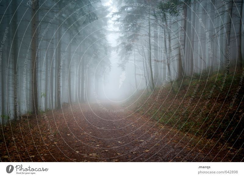 Wetter | Trüb Natur Baum Landschaft dunkel kalt Wald Umwelt Herbst Wege & Pfade Angst Nebel trist Klima Ausflug bedrohlich Zukunft