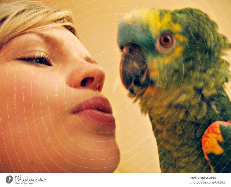Frida Forever Vogel Papageienvogel mehrfarbig schön Tierliebe Vertrauen Wohlgefühl bunter vogel Feder bunte federn Liebe