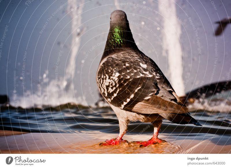 Ein Bad jetzt? Himmel Natur Stadt Wasser Tier kalt Umwelt Schwimmen & Baden Vogel Park Wildtier frisch Schönes Wetter Urelemente Brunnen Zoo