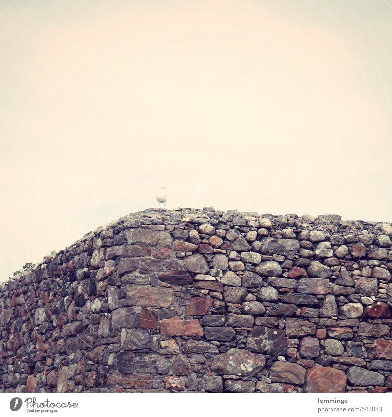 möwenschiss Umwelt Natur Landschaft Mauer Wand Tier Vogel 1 braun grau weiß Möwe Möwenvögel Mauerstein Steinmauer Backstein Bruchstein Schottland Außenaufnahme