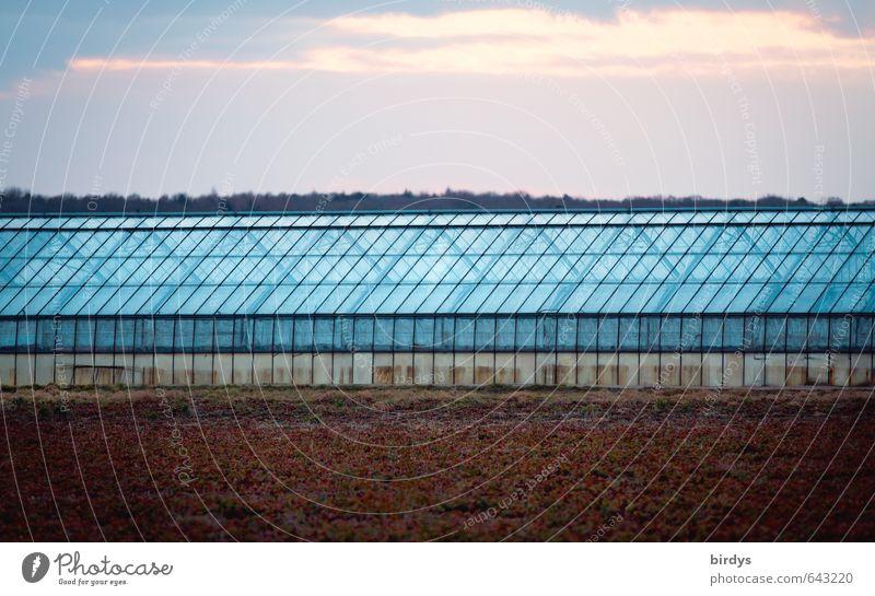 Glashaus linear Landwirtschaft Forstwirtschaft Gärtnerei Himmel Wolken Sonnenaufgang Sonnenuntergang Feld Gewächshaus leuchten ästhetisch groß lang blau