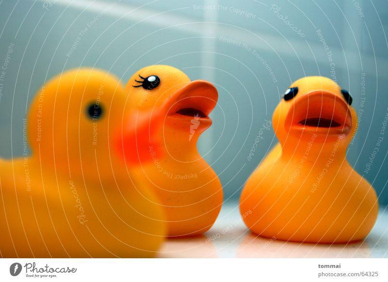 Quak Wasser blau rot Auge gelb Schwimmen & Baden offen Bad Toilette Appetit & Hunger Schminke Ente Schnabel Kosmetik Quaken