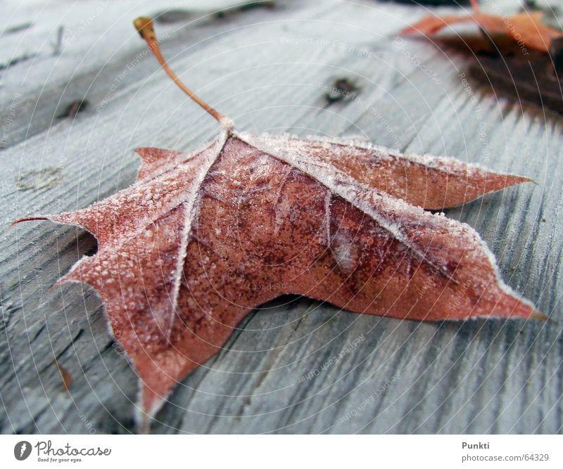 Herbstlaub Blatt kalt Schnee Eis Seil Frost