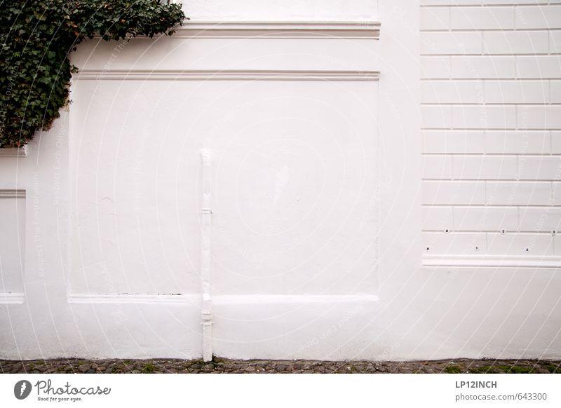 Wand-Portrait Natur Stadt weiß Pflanze Haus Tier kalt Umwelt Mauer Fassade Wachstum retro streichen Röhren eckig