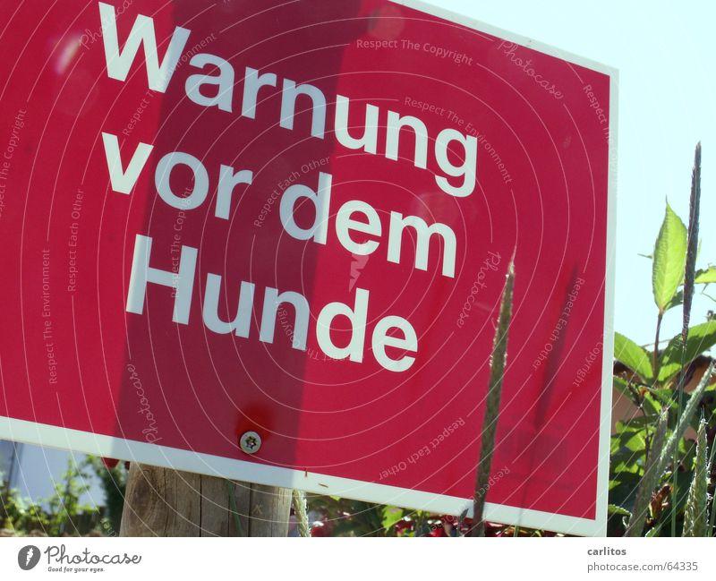 cave canem rot verrückt Schilder & Markierungen Hund Warnschild Dogge Haushund Pechvogel