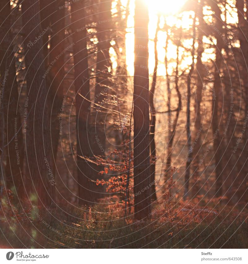 warmes Licht im Novemberwald Herbstwald heimisch Waldbaden besonderes Licht laublose Bäume herbstliche Impression Waldstimmung Lichtstimmung Novemberstimmung