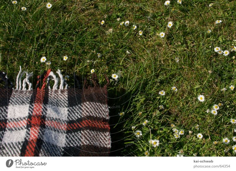 Setz dich, nimm dir 'nen Keks! Wiese Gras gemütlich Picknick Gänseblümchen Freizeit & Hobby lecker Erholung Baden-Württemberg grün Muster Streifen Decke Franse