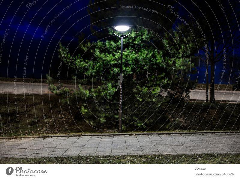 HOOLS Baum Stadtzentrum dunkel einfach kalt rebellisch trashig blau grün Einsamkeit Ordnung rebellieren ruhig Symmetrie Architektur Straßenbeleuchtung Hooligan